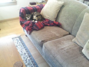 Photo of kitty curled up on couch
