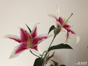 Photo of Stargazer Lily flowers
